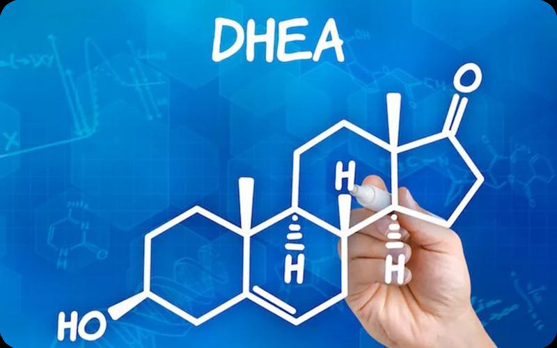 Estructura bioquímica de la DHEA