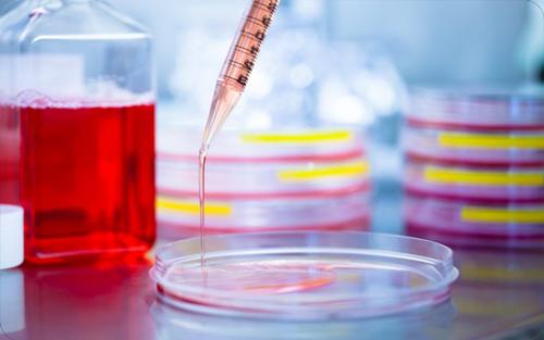 Células madres en el endometrio