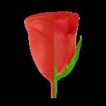 Sileu Rose
